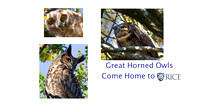 "Photos from my Book, ""Rice's Owls"""